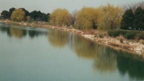 reflex05