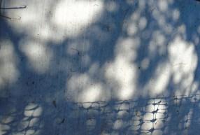shadows107