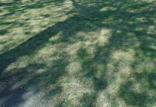 shadows112