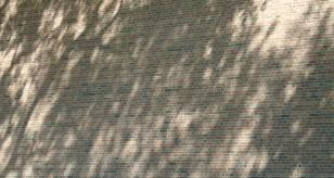 shadows113