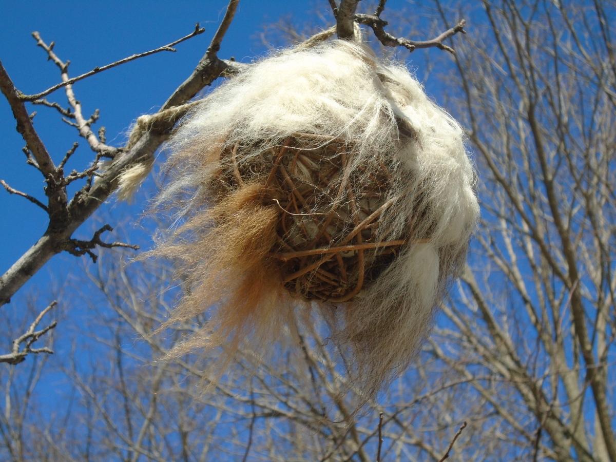 Catbird Hairboll