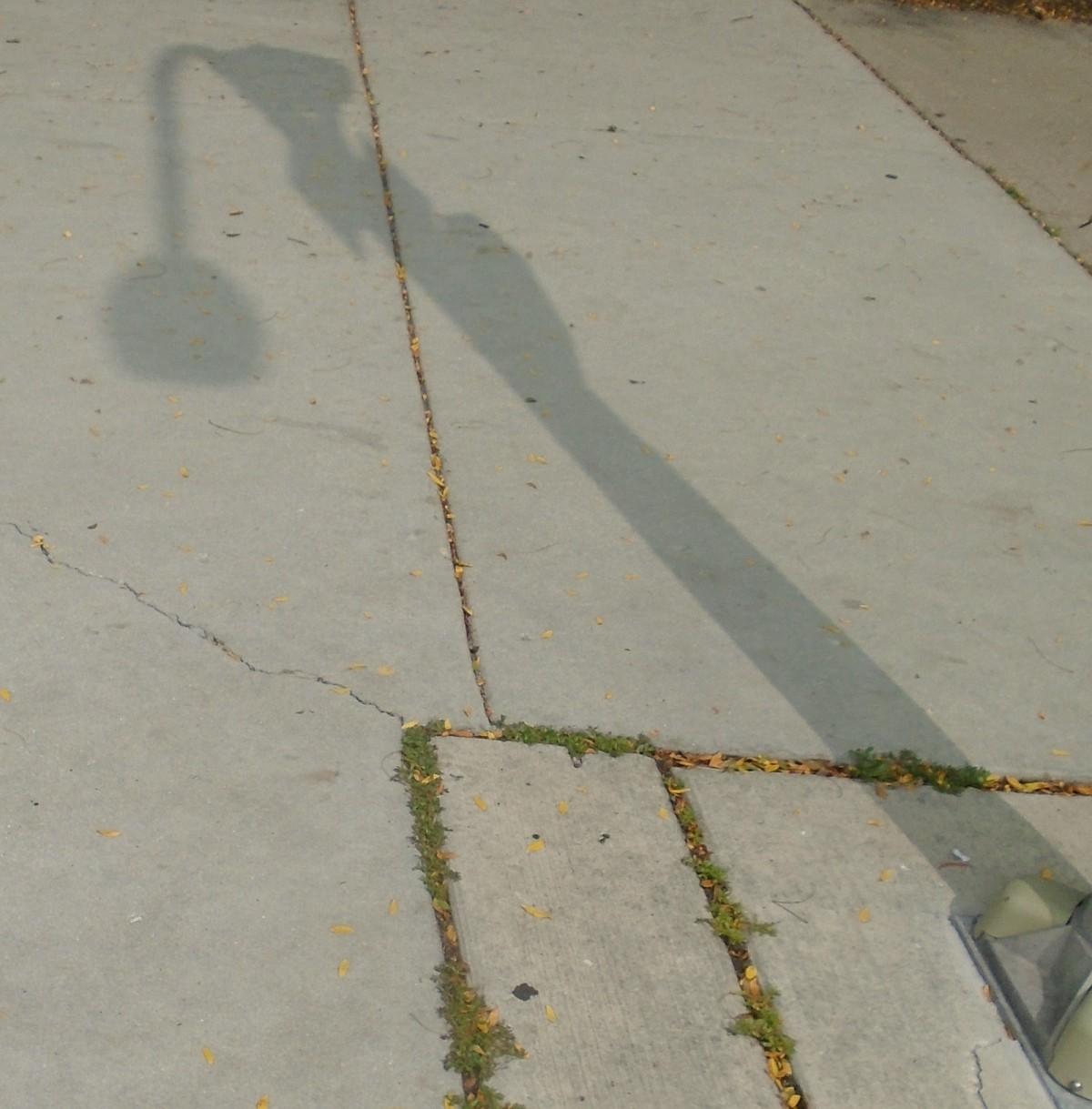 Portrait of a Streetlight as aShowerhead