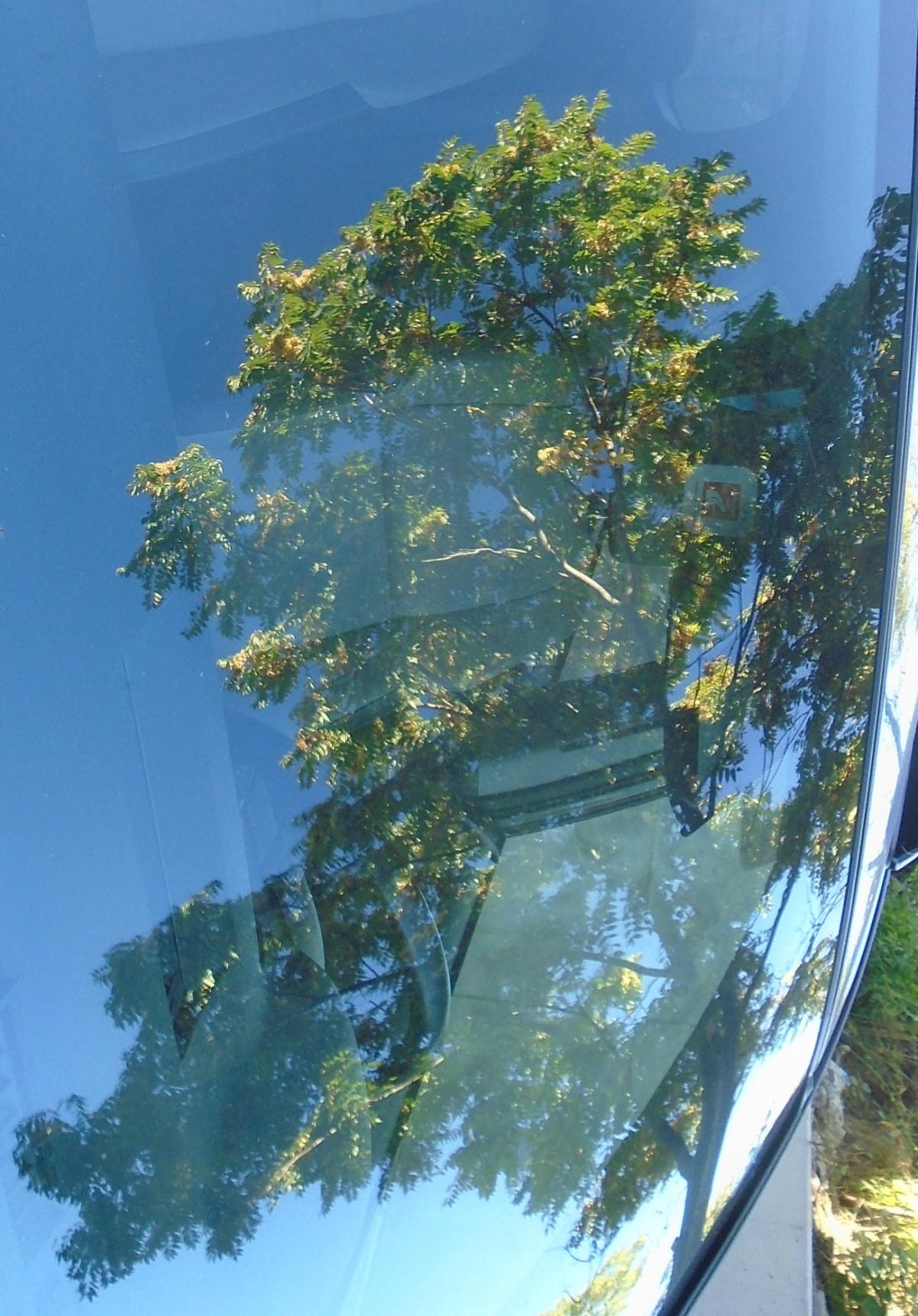 Tree Brane