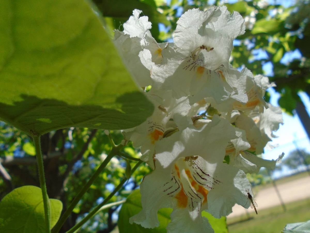 Tree in Blooms
