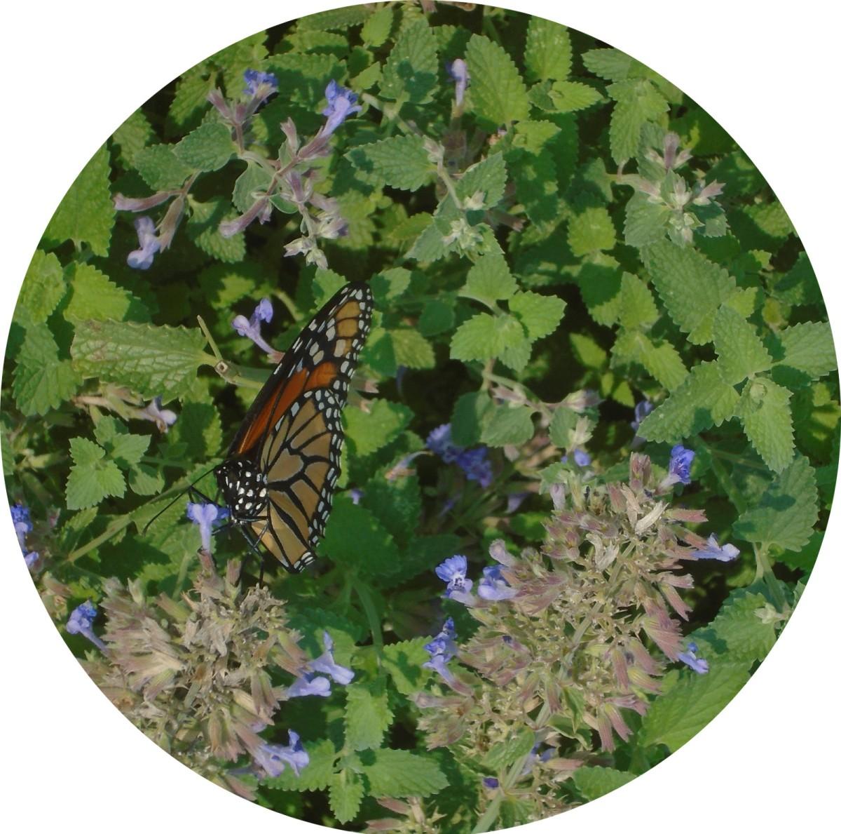 Monarchs Rule