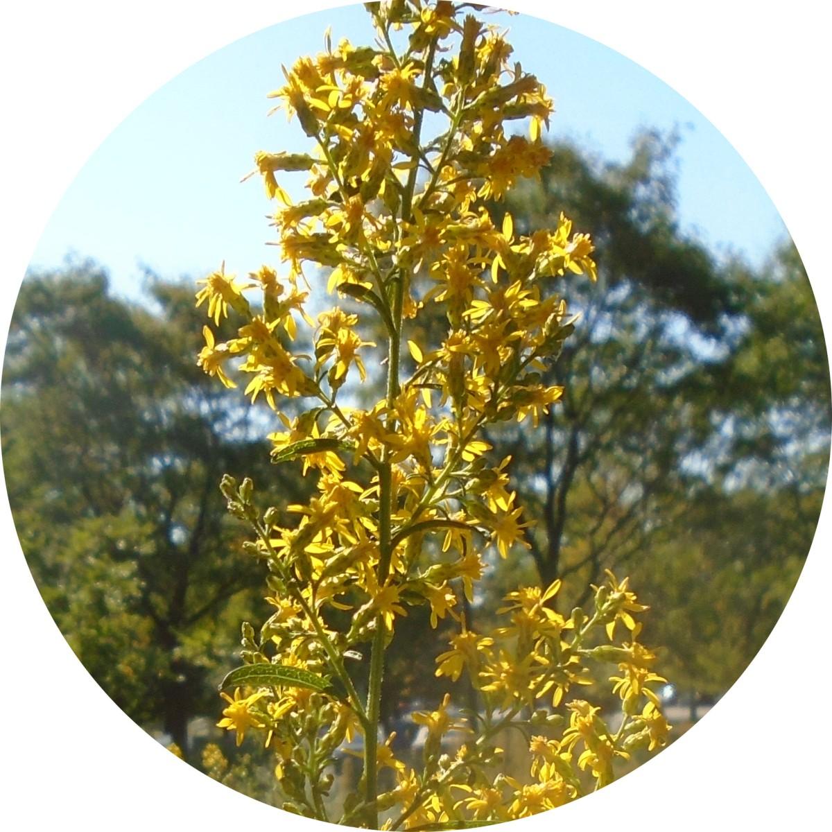 Speculative Weeds…